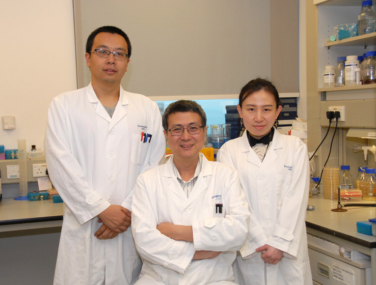 HKU Scientists Effectively Suppress Tumour Growth by Converting Salmonella into YB1 Anaerobe Bacterium gallery photo 1